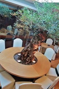 interior greening landscaping hotel gastronomy big plants