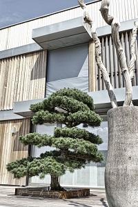 innenraumbegr nung raumbepflanzung xxl baum gro e pflanzen. Black Bedroom Furniture Sets. Home Design Ideas