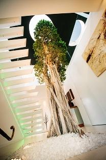 Atrium innenraumbegr nung baum im raum lichthof pflanzen for Raum pflanzen