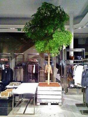 Plantes pour fashion boutique interieur for Acheter plantes en ligne