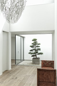 atrium_plant_sell_deliver_bonsai_switzerland_bern