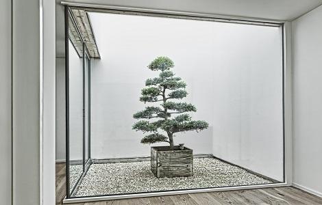 /interior_planting_greening_atrium_switzerland_bonsai
