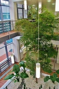 bucida tree Atrium entrance