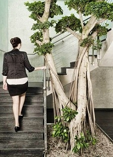 interior-greening_Ficus_microcarpa_bonsai_stairway_plant