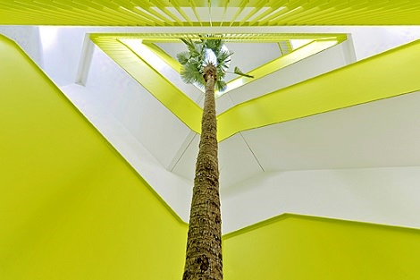 interior_greening_washingtonia_palm_stairway