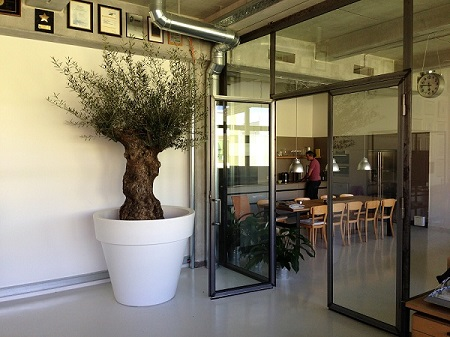 indoor_greening_olive_tree_canteen_munich
