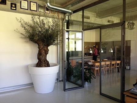 indoor_greening_olive_tree_canteen_munich