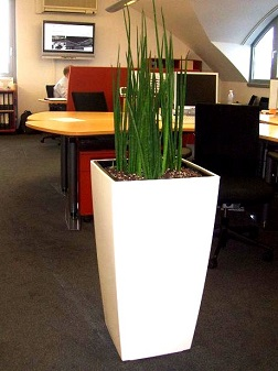 indoorgreening_open-plan_office_munich_plant