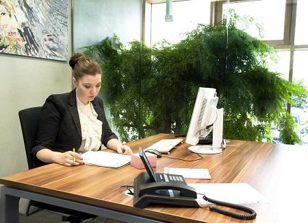 interior_greening_office_plants_germany
