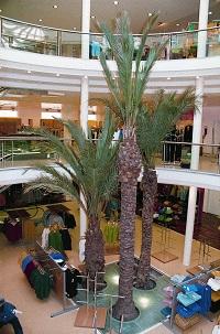 interior greening fashion shop plants palms buy-online