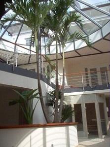 nterior_greening_wellness-spa_veitchia_palms_buy_online