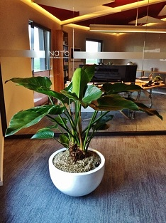 plants pottery conference room buy online