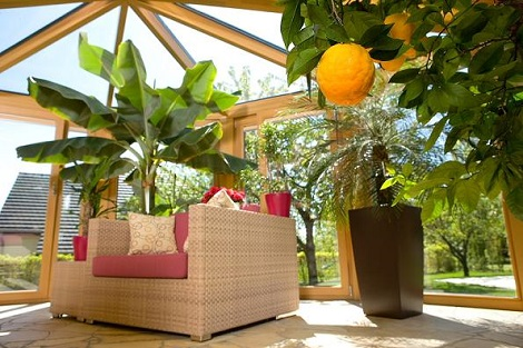 conservatory/wintergarden_greening_luxembourg_tropical_plants_buy