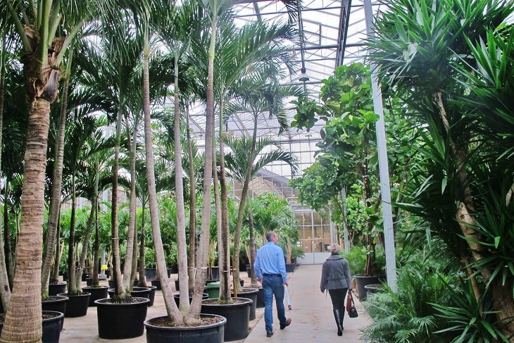 green house big tropical plants buy online