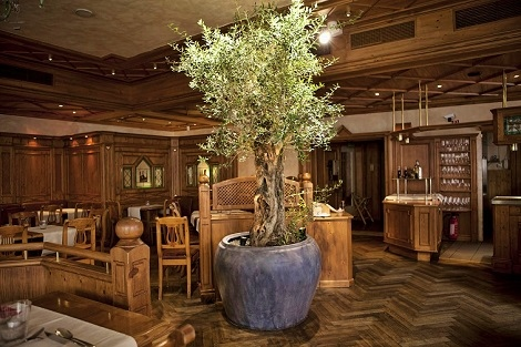 interior_greening_olive_tree_planter_gastronomy_germany