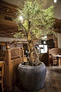 olive_tree-interior_planting_planter_planting_gastronomy