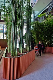 Bamboo-tropical-greening-conference-hall-buy-online