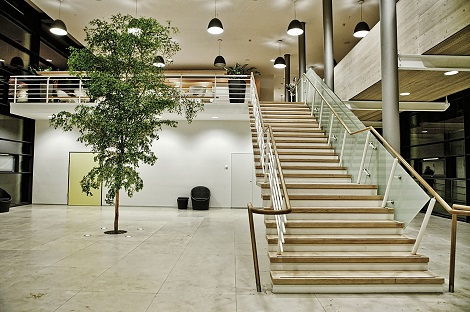 bucida-buceeras_in-ground_indoor_planting_stairway_entrance_hall