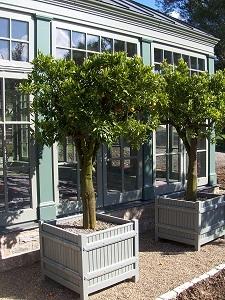 Invernadero-de-naranjos-Orangeria