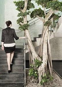 Plantas-para-Entrada-Escaleras-Pasillo