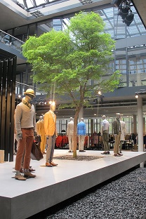 boutique-de-moda-con-arbol-tropical-bucida