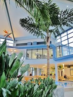 caryota palmera para Pools bano termal y piscinas interior