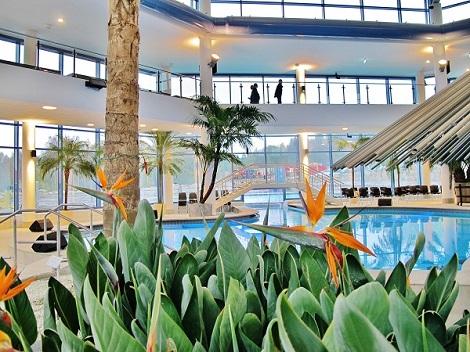 strelitzia reginae para Pools bano termal y piscinas interior