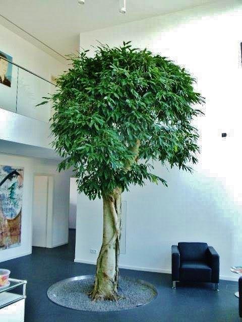 innenraumbegruenung allgaeu pflanze online kaufen