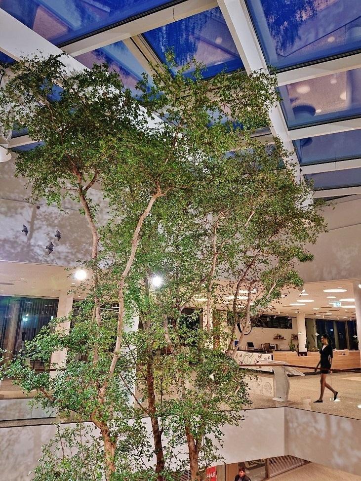 Baum Raum Pflanze Luxembourg online kaufen