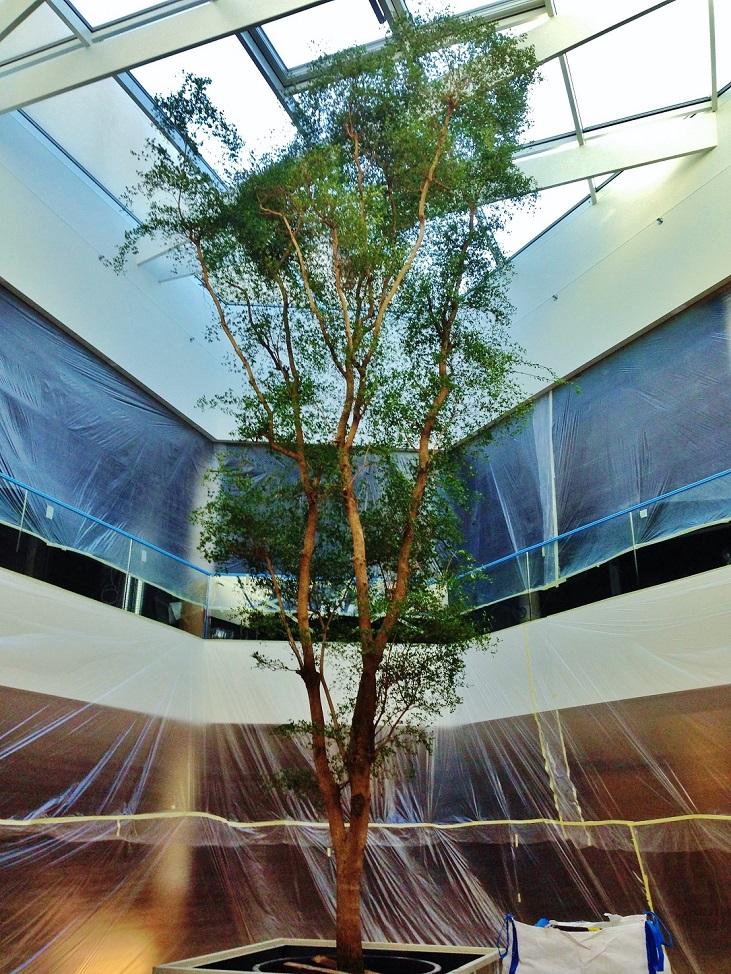City Condorde Luxembourg grand arbre intérieur acheter