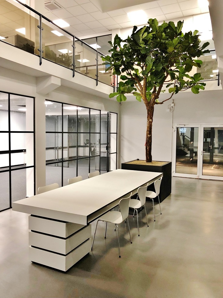 Lyrata Baum Innenraumbegruenung kaufen Luxembourg