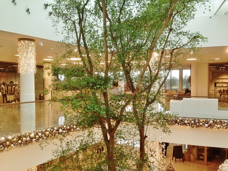 Shopping mall Luxembourg Bucida Baum online kaufen