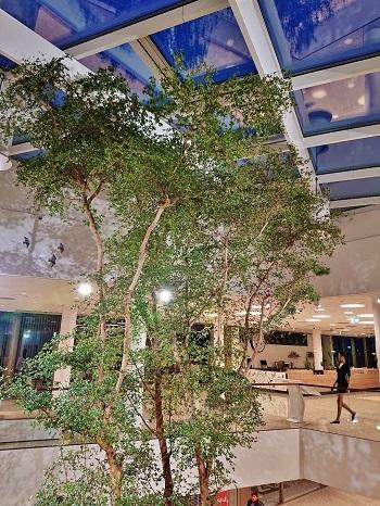Shopping Center Luxembourg Bucida Baum kaufen