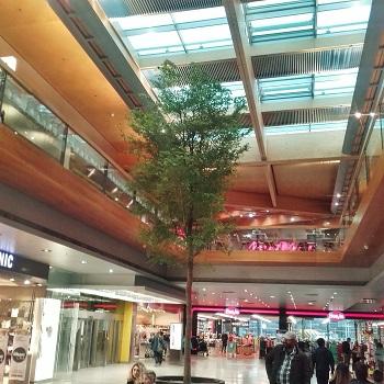 Vorarlberg Baum Innenraum kaufen