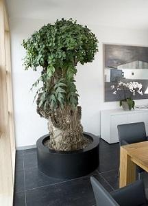 Office interior greening with plants and planters