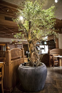 Interior greening of Hotel and Gastronomy