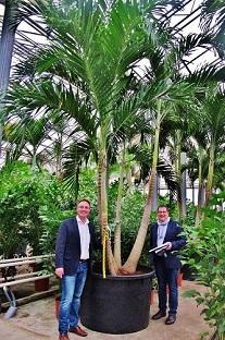veitchia palme von bauherren ausgesucht im glashaus botanic international
