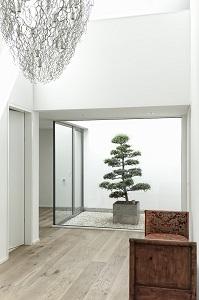 innenraumbegruenung Atrium Raumbegruenung Pflanze kaufen Bern Schweiz