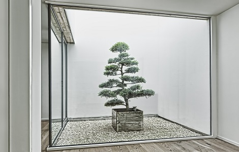 innenraumbegruenung atrium lichthof innenhof bonsai bern schweiz