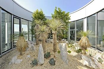 yucca rostrata und kakteen im atrium, lichthof innenraum bepflanzt