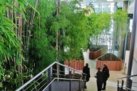 Bambus-Innenbegruenung-Treppenaufgang-online-kaufen