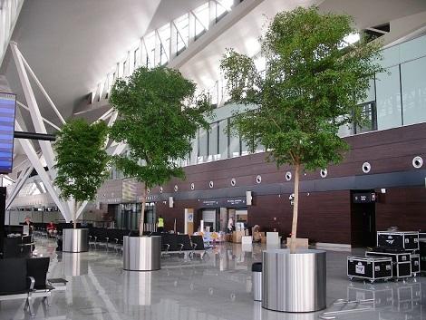 Flughafenbegruenung bucida baum planen kaufen edelstahlgefaess