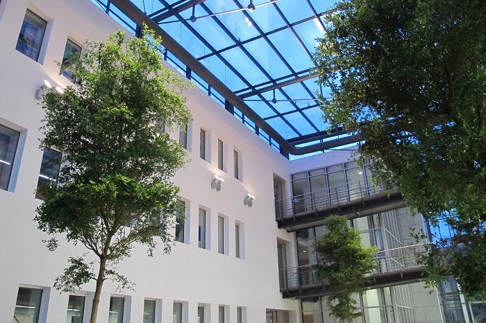 tropischer baum im lichthof, innenhof oder atrium