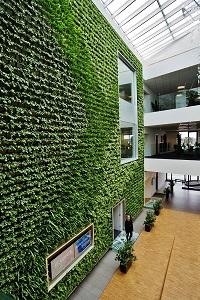 Green Wall installing indoor