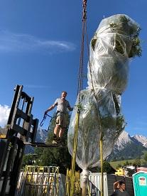 Hotelpflanzung Baum Hochkoenig Salzburger Land