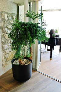 pflanzen lobby hotel begruenung