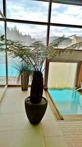schwimmbadbegruenung hotel mit baumfarn dicksonia kaufen