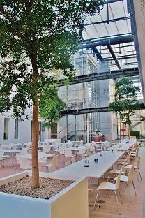hotel_gastronomie/bucida-gastronomie-pflanzen-kaufen