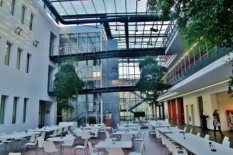 getec-gastronomie-bucida-baum-kaufen-magdeburg