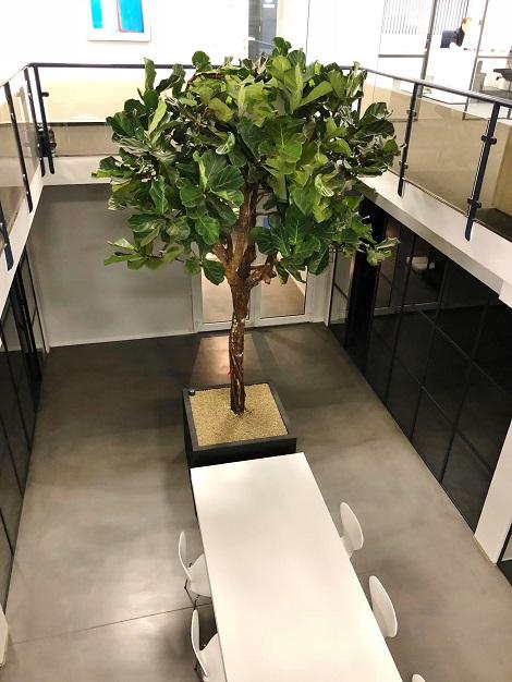 Baum im Raum online kaufen